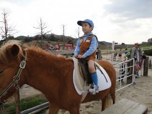 乗馬を体験するビーバースカウト